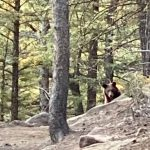 When you meet a bear in the woods
