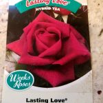Rose Bush Seeds